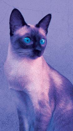 20111104152523-gato-mitico3.jpg